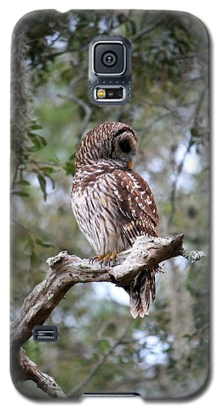 Spotted Owl Galaxy S5 Case