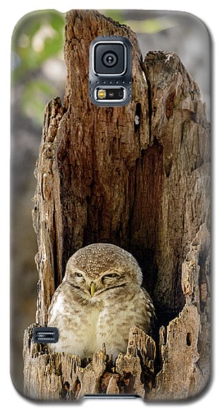 Spotted Owlet Galaxy S5 Case