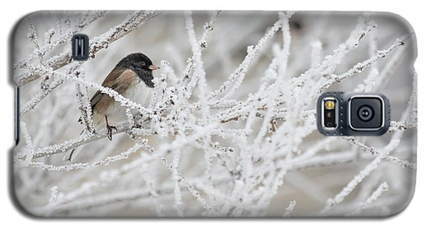 Spotted Towhee In Winter Galaxy S5 Case