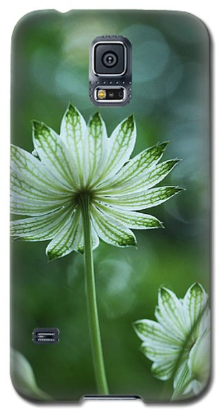 Botanica .. Spray Of Light Galaxy S5 Case