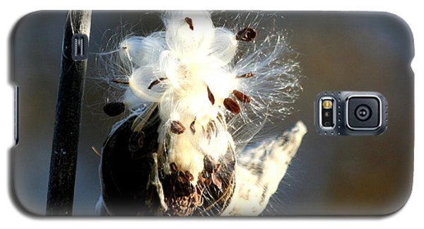 Galaxy S5 Case featuring the photograph Spreading Seeds by Diane Merkle