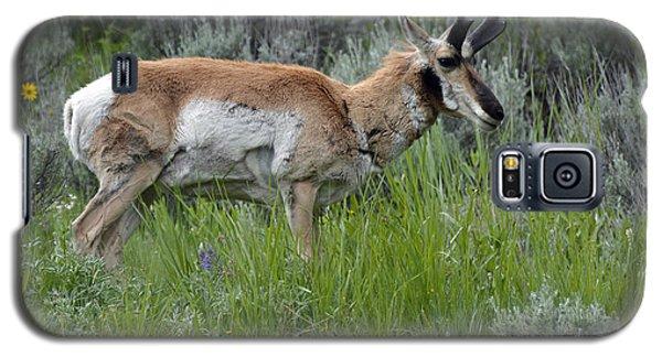 Spring Antelope Galaxy S5 Case