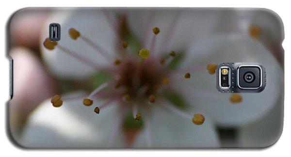 Spring Beauty Macro 1 Galaxy S5 Case
