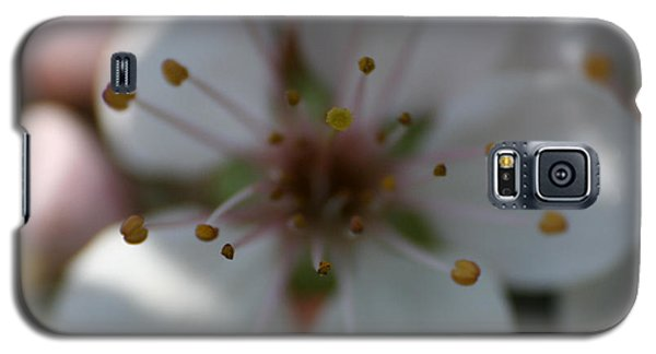 Spring Beauty Macro 1 Galaxy S5 Case