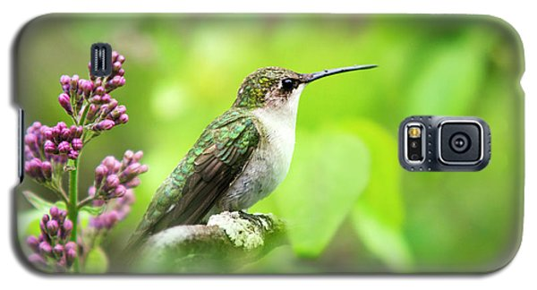 Spring Beauty Ruby Throat Hummingbird Galaxy S5 Case by Christina Rollo