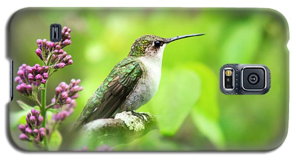 Spring Beauty Ruby Throat Hummingbird Galaxy S5 Case by Christina Rollo