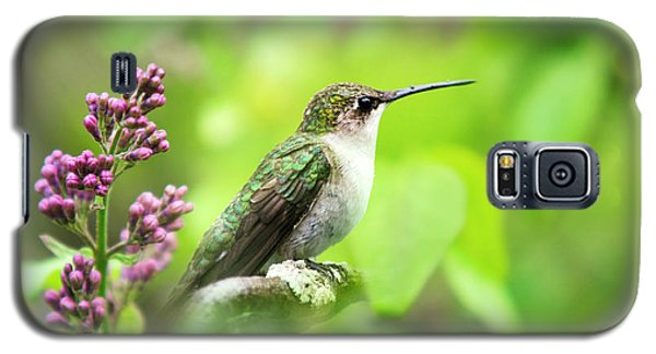 Spring Beauty Ruby Throat Hummingbird Galaxy S5 Case