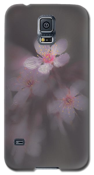 Spring Blooms In The Fog Of Late Winter Galaxy S5 Case by Mick Anderson