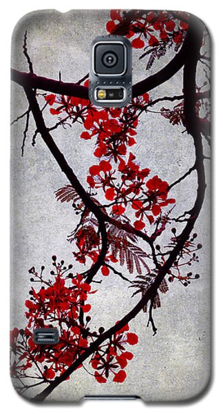 Spring Bloosom In Maldives. Flamboyant Tree II. Japanese Style Galaxy S5 Case by Jenny Rainbow