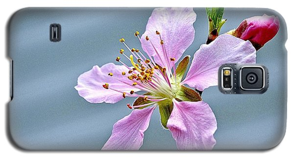 Spring Blossom Galaxy S5 Case by Ludwig Keck