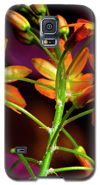 Galaxy S5 Case featuring the photograph Spring Blossoms 3 by Stephen Anderson