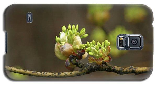 Spring Buds 9365 H_2 Galaxy S5 Case
