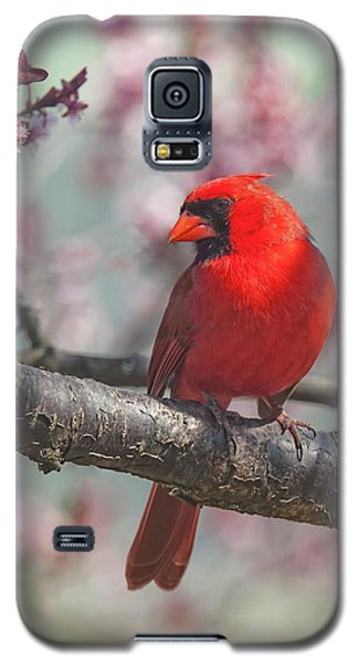Spring Cardinal 2 Galaxy S5 Case