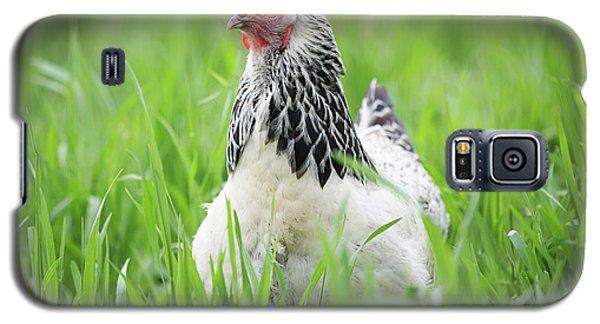 Spring Checken Galaxy S5 Case