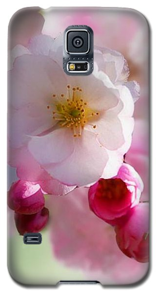 Spring Cherry Blossom Galaxy S5 Case