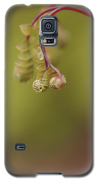 Galaxy S5 Case featuring the photograph Spring Coming 2017 by Jeff Burgess
