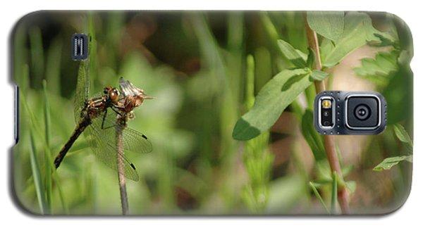 Galaxy S5 Case featuring the photograph Spring Dragonfly by LeeAnn McLaneGoetz McLaneGoetzStudioLLCcom