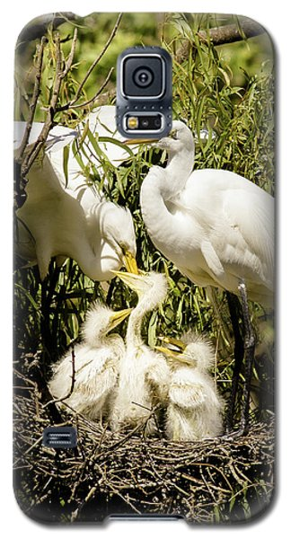 Galaxy S5 Case featuring the photograph Spring Egret Chicks by Robert Frederick
