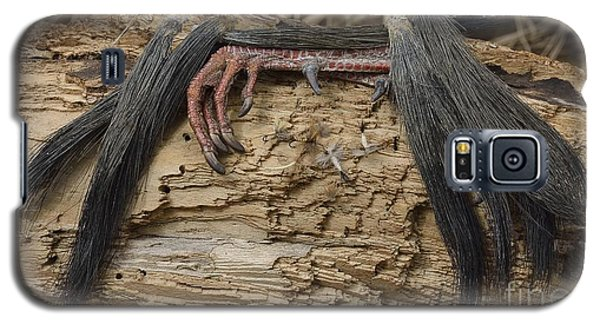 Galaxy S5 Case featuring the photograph Spring Feathers by Randy Bodkins