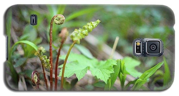 Spring Ferns Galaxy S5 Case
