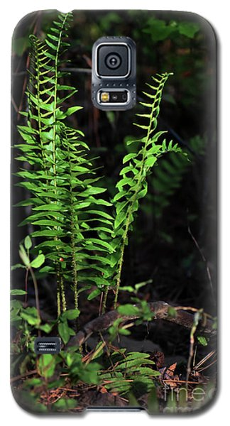 Galaxy S5 Case featuring the photograph Spring Ferns by Skip Willits