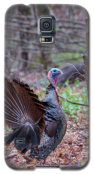 Galaxy S5 Case featuring the photograph Spring Gobbler by Bill Wakeley