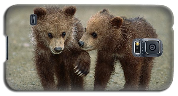 Brown Bear Galaxy S5 Case - Spring Grizzly Cubs In Denali by Yva Momatiuk John Eastcott