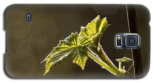 Spring Has Sprung - 365-27 Galaxy S5 Case by Inge Riis McDonald