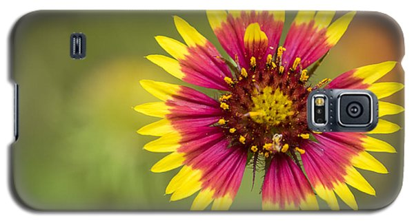 Spring Indian Blanket Galaxy S5 Case