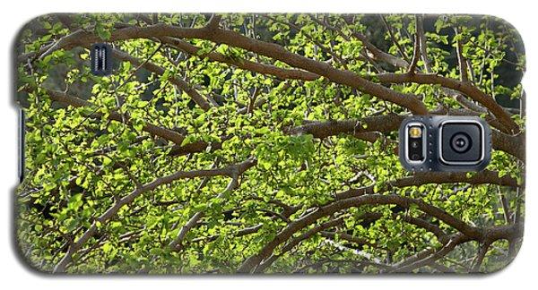 Spring Is Here Galaxy S5 Case by Yoel Koskas