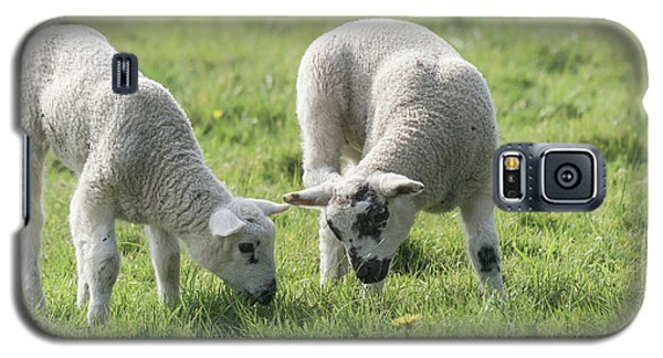 Galaxy S5 Case featuring the photograph Spring Lambs by Scott Carruthers