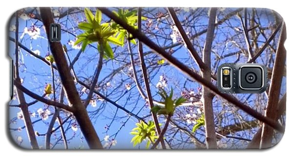 Sky Galaxy S5 Case - Spring Leaves #seasons #trees by Shari Warren