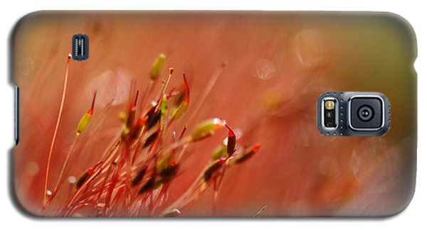 Galaxy S5 Case featuring the photograph Spring Macro3 by Jeff Burgess