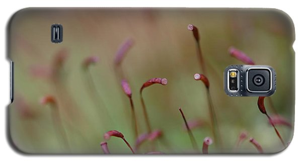 Galaxy S5 Case featuring the photograph Spring Macro5 by Jeff Burgess