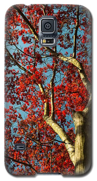 Galaxy S5 Case featuring the photograph Spring Maple by Dana Sohr