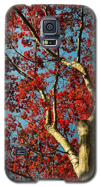 Spring Maple Galaxy S5 Case