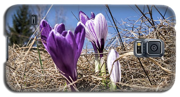 Spring On Bule Galaxy S5 Case by Nick Mares