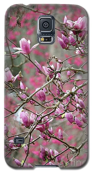 Saucer Magnolia Galaxy S5 Case - Spring Pink And Gray Branches by Carol Groenen