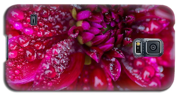 Spring - Rain And Flower Galaxy S5 Case