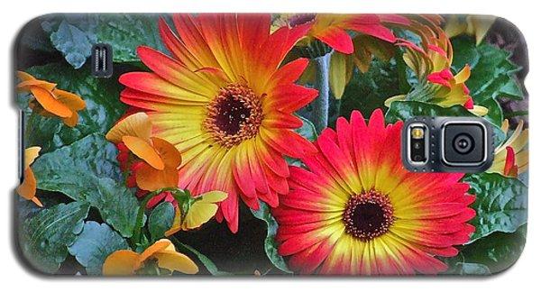 Spring Show 14 Gerbera Daisy 1 Galaxy S5 Case