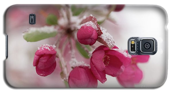 Galaxy S5 Case featuring the photograph Spring Snow by Ana V Ramirez