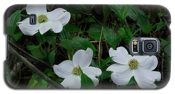 Galaxy S5 Case featuring the photograph Spring Time Dogwood by Mike Eingle