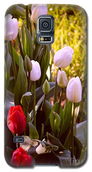 Galaxy S5 Case featuring the photograph Spring Time Tulips by Susanne Van Hulst