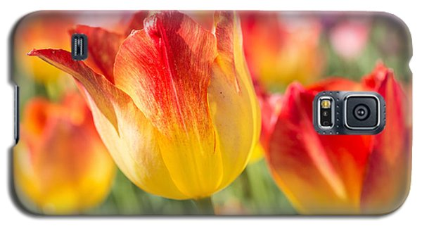 Spring Touches My Soul Galaxy S5 Case