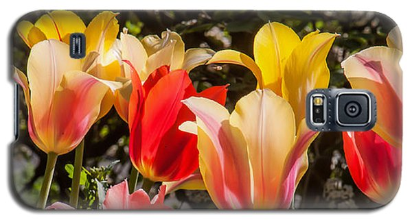 Spring Tuliips Galaxy S5 Case by Jim Moore