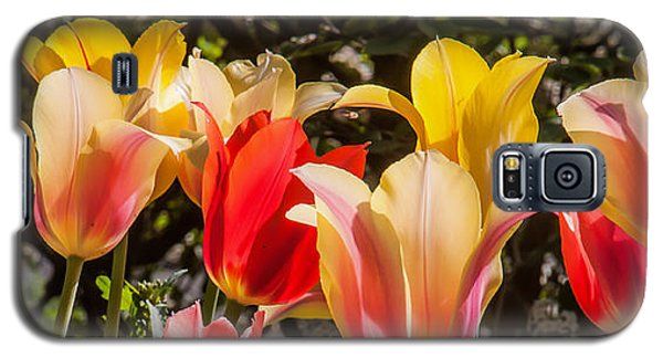 Galaxy S5 Case featuring the photograph Spring Tuliips by Jim Moore