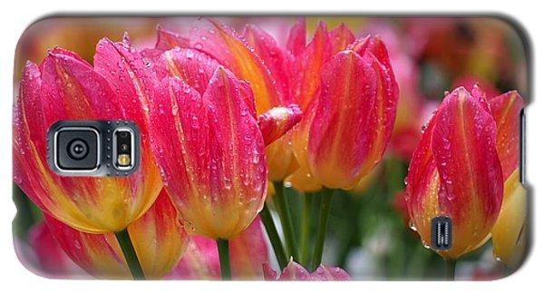 Spring Tulips In The Rain Galaxy S5 Case
