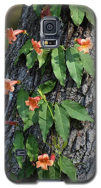 Galaxy S5 Case featuring the photograph Vinery by Skip Willits