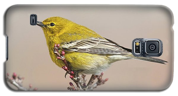 Galaxy S5 Case featuring the photograph Spring Warbler 1 2017 by Lara Ellis