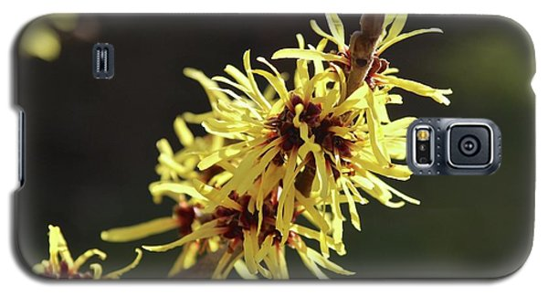 Galaxy S5 Case featuring the photograph Spring by Wilhelm Hufnagl